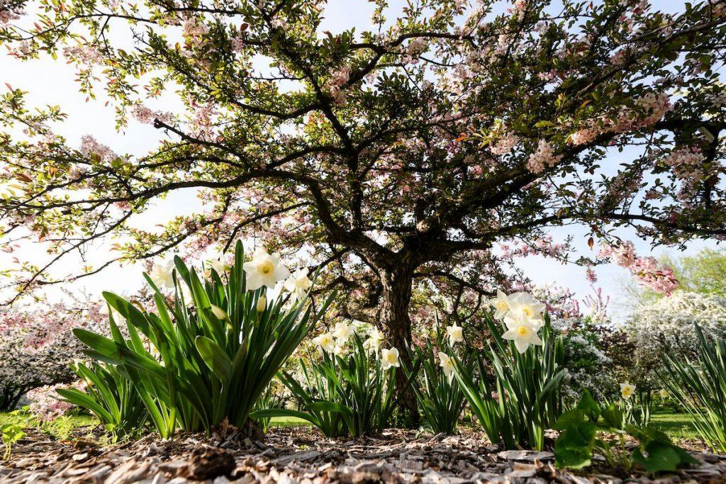 The UW-Madison Arboretum in Spring